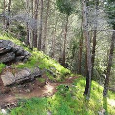 Burnside Walks - B - Wheal Watkins Circuit is a grade 3 Circuit hike located in Mount Osmond Reserve South Australia. The hike should take approximately to complete. Thing 1, South Australia, Hiking Trails, Walks, Circuit, Grade 3, Adventure, Places, Adventure Movies