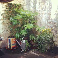 Small garden at a Nepalese restaurant: Yak Yeti Yak in Bath