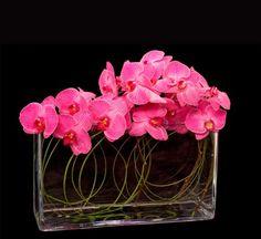 IDEA PHOTO: phalaenopsis orchids
