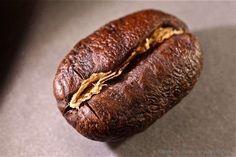 Kenya Karani Peaberry Coffee Beans Fresh Roasted Whole Bean  Ground  2 / 1LBS