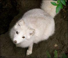 Breathtaking Innocent Animal Photos