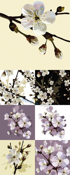 Cherry tree flowers vector