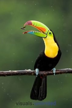 Keel-billed Toucan  From Jeanette's board Amazing-Creation-Romans 1:20
