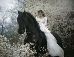 one of the dream horses, friesian