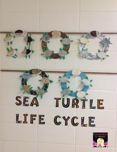 Conversations in Literacy: One Tiny Turtle Craft and Writing Day Camp Activities, Science Activities, Science Vocabulary, Sequencing Activities, Party Activities, Sea Turtle Life Cycle, Ocean Projects, Plant Science, Life Science