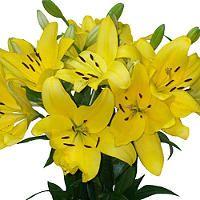 Asiatic (LA) Lilies - Yellow - 40 Stems - Sam's Club