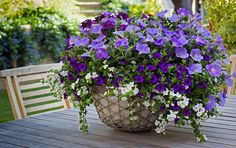 HGTV HOME Plants One-Step Style Your Home Purple Genius