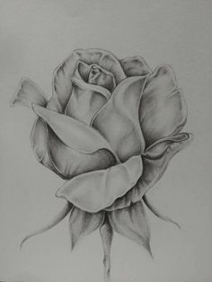 Graphite rose print - New Site Realistic Flower Drawing, Pencil Drawings Of Flowers, Flower Art Drawing, Flower Sketches, Art Drawings Sketches Simple, Pencil Art Drawings, Rose Drawings, Flower Sketch Pencil, Rose Drawing Pencil