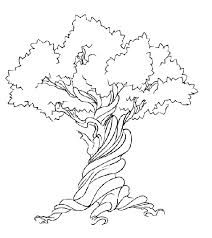 drawings for olive tree - Αναζήτηση Google