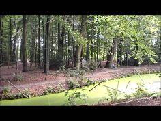 Takkengordijn in het Overbosch bij Voorhout. Een speelse markering tussen bos en water, die je eigenlijk alleen echt vanaf een stoel bij de installatie kunt ervaren.