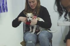It's the holidays, and we all know there's nothing better than rocking an ugly Christmas sweater. But wait, what if you put adorable little adoptable animals in Christmas sweaters?! | A Shelter Held An Ugly Sweater Party For Animals And It'll Warm Your Cold Heart