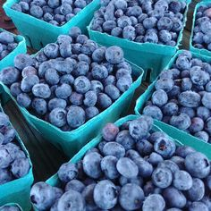 Learn to establish your own blueberry patch, and how to plant blueberry bushes that will produce a bountiful harvest. Blueberry Plant, Blueberry Bushes, Growing Peach Trees, Lawn And Garden, Garden Tips, Garden Paths, Fruit Garden, Herbs Garden, Organic Gardening