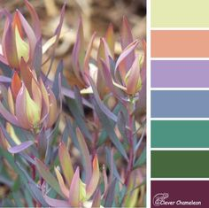 "colour inspiration This week's Colour Inspiration Tuesday mood board is ""Lovely Leucadendron"". ""Lovely Leucadendron"" captures just a fraction of the extensive palette of beautiful m Color Schemes Colour Palettes, Colour Pallette, Color Palate, Color Combos, Pinturas Color Pastel, Color Harmony, Design Seeds, Color Stories, Color Swatches"
