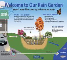 Mi az az esőkert? - Megyeri Szabolcs kertész blogja