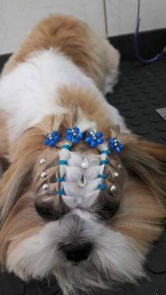 Why Grooming Your Dog is Very Important Grooming Yorkies, Dog Grooming Tools, Dog Grooming Styles, Creative Grooming, Dog Grooming Supplies, Perro Shih Tzu, Shih Tzu Dog, Cute Dog Photos, Cute Puppy Pictures