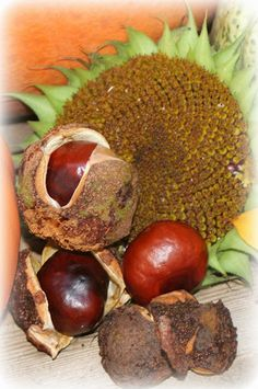 horse chestnuts and sunflower seeds