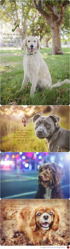 Create bokeh in your pet portraits with this tutorial via ragmuffinpetphotography.com