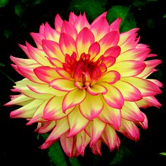Dahlias flores hermosas pinterest dahlia flowers and gardens pretty flower mightylinksfo