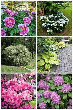 12 best bushes to plant under trees