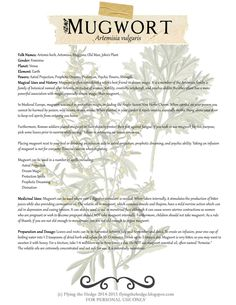 Mugwort Free BOS page on Mugwort. Medicinal and Magical uses of Mugwort.Free BOS page on Mugwort. Medicinal and Magical uses of Mugwort. Healing Herbs, Medicinal Plants, Natural Healing, Magic Herbs, Herbal Magic, Plant Magic, Magick, Witchcraft, Earth Powers