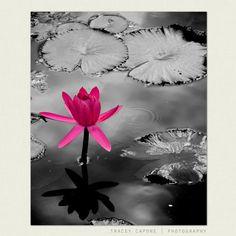 Impresiones de la naturaleza fotografía de flor por TraceyCapone