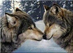 Wolf#susi#varg
