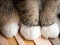 Maru's paws ♡