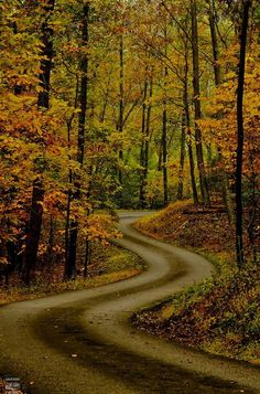 Autumn Road by konrad_photography Beautiful Roads, Beautiful Landscapes, Beautiful Places, Foto Blog, Autumn Scenery, Back Road, Winding Road, All Nature, Jolie Photo