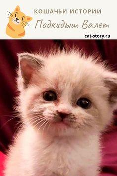 Подкидыш Валет — Кошачьи истории Cats, Movies, Movie Posters, Animals, Gatos, Animales, Films, Animaux, Film Poster