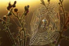 more webs . . .
