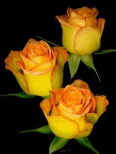 hermosas flores encontradas en la web