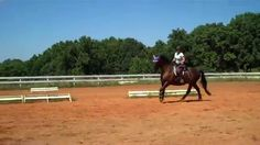 """""""What can you do if your horse seems to always be bringing it's nose behind the vertical at the canter?  It's time to try something new!""""  Does your horse go behind the vertical at the canter? Did you get any new ideas of how to help your horse to bring in forward after watching this video?"""