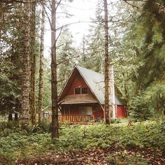 Would you live here? Photo by @lostintheforrest #liveauthentic #livefolk