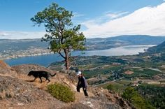 Hike up Giant's Head Mountain in Summerland, BC.