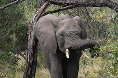 Elephant photographed by Braam Byleveldt