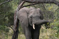 Elephant photographed by Braam Byleveldt