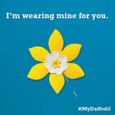 Who are you wearing your daffodil for? #MyDaffodil