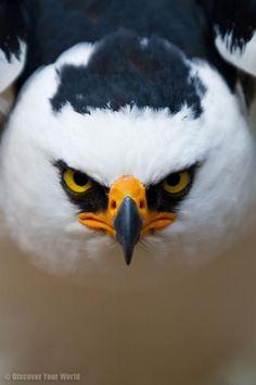 South America's Unusual Animals in Stunning Close-ups (Slideshow)