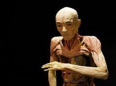 """El cuerpo humano es una obra de arte y """"Human Bodies, The Exhibition"""" te ofrece la posibilidad de admirarlo más allá de la piel. Déscubre la arquitectura más perfecta con tu entrada para esta polémica muestra de arte moderno. Compra ya tus cupones descuento en CaripenDeal y comparte la experiencia."""