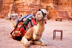 "Ride a camel - had the opportunity in Israel and ""didn't have time.""  UGH!"