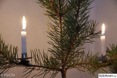 jul,ljushållare,levande ljus,tall,juleljus   Old-country Christmas tree candles and Christmas tree candles holders from:  www.christmasgiftsfromgermany.com