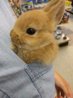 Cute little animals and other funny pictures Cute Baby Bunnies, Baby Animals Super Cute, Cute Little Animals, Cute Funny Animals, Cute Dogs, Cute Babies, Cute Bunny Pictures, Baby Animals Pictures, Fluffy Animals