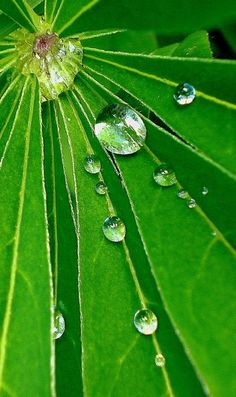 beauty, dewdrops, drops, glas, green, joy