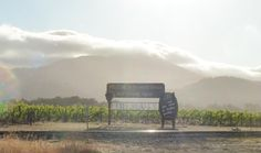 Cool summer evening fog mingles around in Oakville  along the future route of the Napa Valley Vine Trail.
