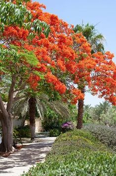 Beautiful Ein Gedi, Israel. Ein Gedi is an oasis in Israel, located west of the Dead Sea, near Masada and the Qumran Caves. (V)