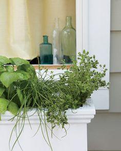 good advice on window box gardens from marthastewart.com