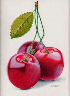 """Daily Paintworks - """"Cherry Triple"""" - Original Fine Art for Sale - © Dietrich Moravec Watercolor Fruit, Fruit Painting, Fine Art Auctions, Polychromos, Color Pencil Art, Coloured Pencils, Fruit Art, Kitchen Art, Whimsical Art"""