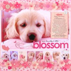 {blossom} by Candice Greenway @2peasinabucket