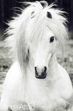 And this beautiful white horse looks like Sir Richard's horse to me, the gorgeous Rogue.