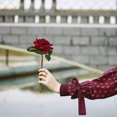 Image discovered by Ãsôsh ❀. Find images and videos about photography, flower and ﺍﻗﺘﺒﺎﺳﺎﺕ on We Heart It - the app to get lost in what you love. Hand Photography, Tumblr Photography, Girl Photography Poses, Rose Flower Photos, Love Rose Flower, Ed Wallpaper, Iphone Wallpaper Quotes Love, Beautiful Fantasy Art, Beautiful Hijab